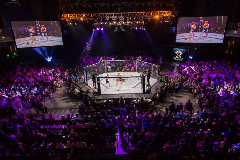 бокс UFC