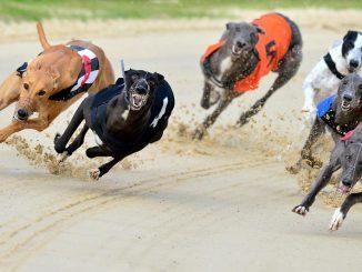 трки со кучиња